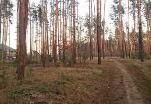 фотография - Участок в окружении леса под Киевом .